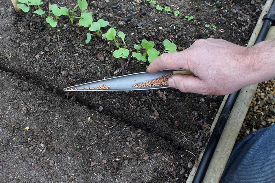 Darlac Seed Sowing Trowel - Bamboo Handle